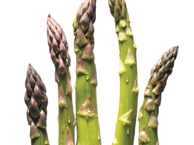 1305-asparagus